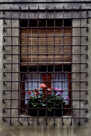 grate: window grate  and flowers the city in mantova italy