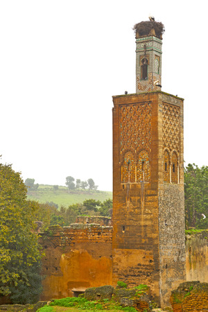 deteriorated: chellah  in morocco africa the old roman deteriorated monument and site Stock Photo