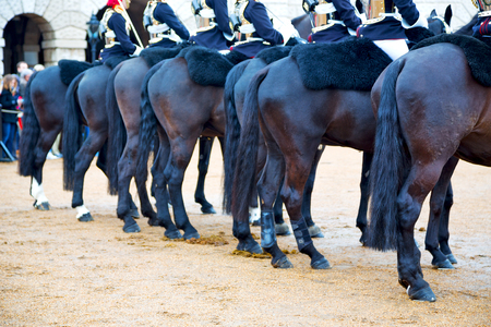 cavalry: in london england horse and cavalry for       the queen