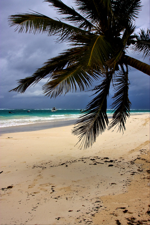 sea weed: tropical lagoon hill navigable  froth cloudy  sea weed  and coastline in mexico playa del carmen