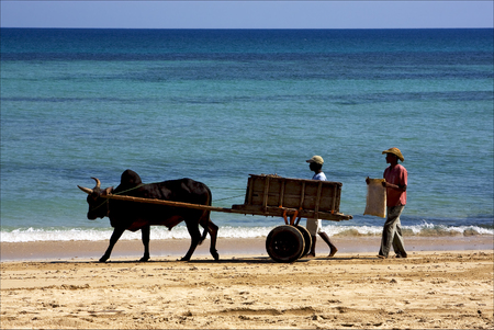 hand cart  people dustman lagoon worker animal and coastline in madagascar nosy be