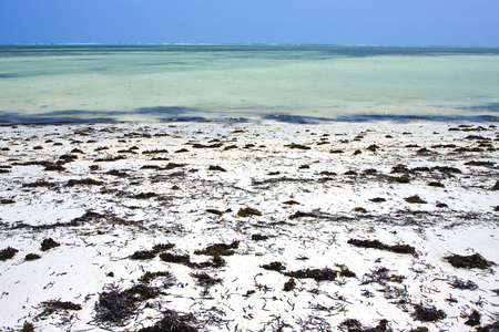 holidays vacancy: seaweed beach and sea in zanzibar coastline Stock Photo
