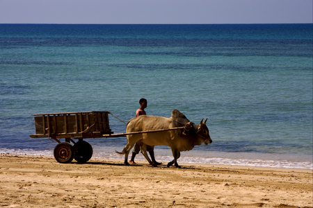 nosy: hand cart  people dustman lagoon worker animal and coastline in madagascar nosy be