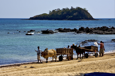 hand cart: hand cart  people palm dustman branch hill lagoon worker animal and coastline in madagascar nosy be Editorial