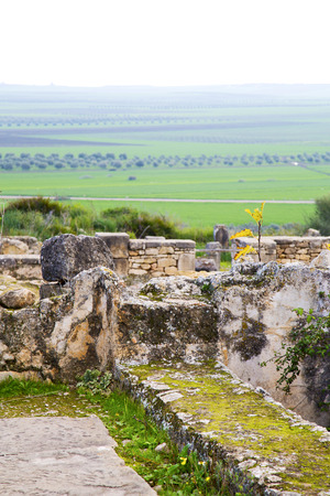 dorian: volubilis in morocco africa the old roman deteriorated monument and site Stock Photo