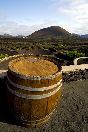 viticulture: viticulture  winery lanzarote spain la geria vine screw grapes wall crops  cultivation barrel