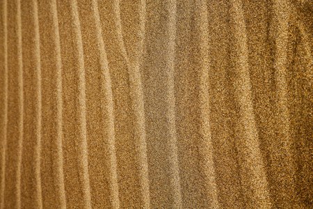 in lanzarote  spain texture abstract of a  dry sand and the beach