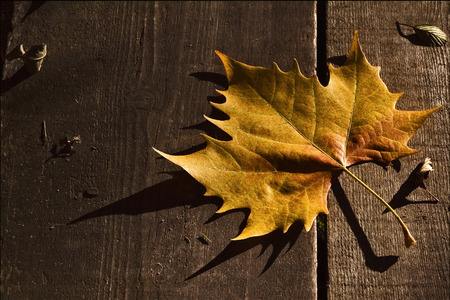 foglia: a leaf in autumn in the wood and the shadow