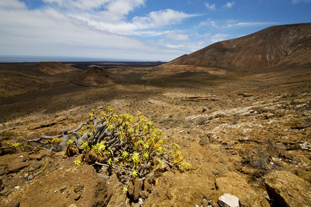 vulcanic timanfaya  rock stone sky  hill and summer in los volcanes lanzarote spain plant flower bush Stock Photo