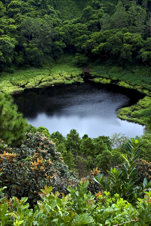 aux: lake mountain plant tree and hill in trou aux cerfs mauritius Stock Photo