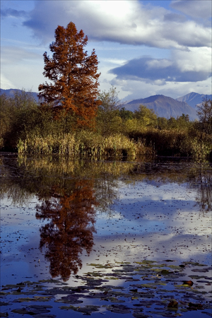 marshy: autumn lake and marsh moor marshy  in the north of italy