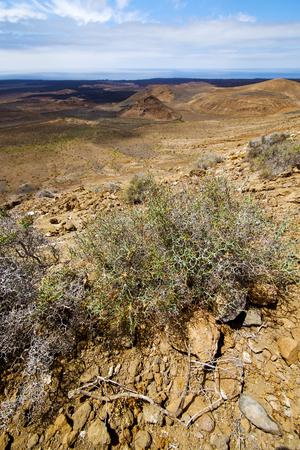 timanfaya: flower  bush timanfaya  in los volcanes volcanic rock stone sky  hill and summer  lanzarote spain plant
