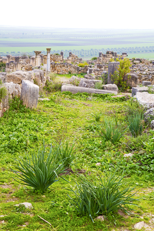 volubilis: volubilis in morocco africa the old roman deteriorated monument and site Stock Photo