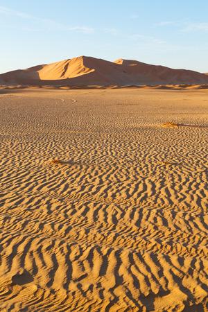 desert sand: the empty quarter  and outdoor  sand  dune in oman old desert rub al khali