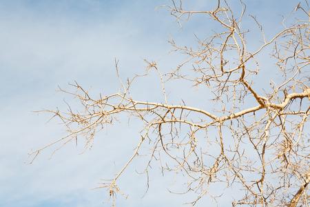 the sky light in oman old dead tree