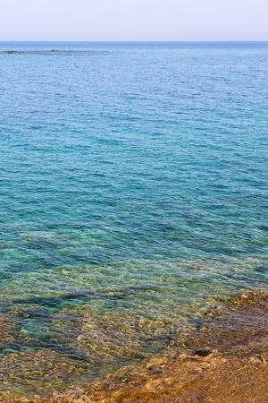 nervation: in the    mediterranean see turkey europe  pine plant and tree Stock Photo