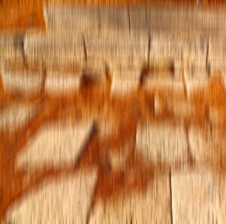 pine needles: pine needles  in arykanda antalya turkey asia   and ruins Stock Photo