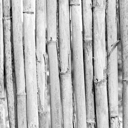 background     texture bamboo wood and plant in the abstract