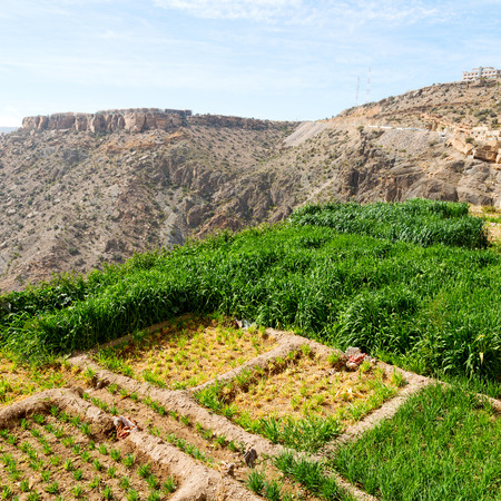 cloude: nature and color in oman the cultivation of rice plant hill Stock Photo