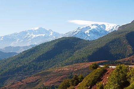 bush in todra gorge morocco africa and    snow