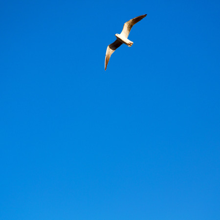 oman background: and free group of birds in oman the sky