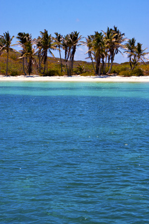 navigable: coastline and rock in the  blue lagoon relax  of isla contoy  mexico