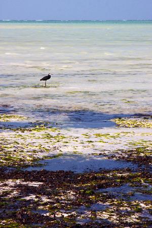 navigable: coastline  bird in the  blue lagoon relax  of zanzibar  africa