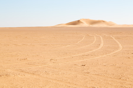 oman: the empty quarter  and outdoor  sand  dune in oman old desert rub   al khali