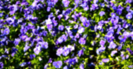 mauve: blur in the spring colors    flowers and   garden  Stock Photo