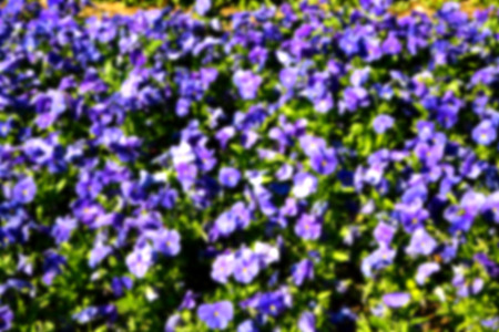 blur in the spring colors    flowers and   garden  Stock Photo