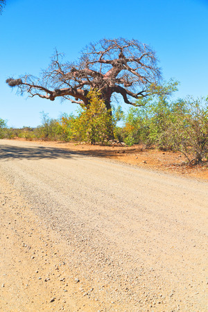 blur     in south africa rocky street and baobab near the bush and natural park
