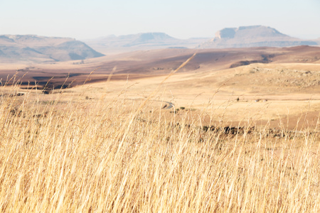 blur in south africa plant   land bush and tree near the   mountain