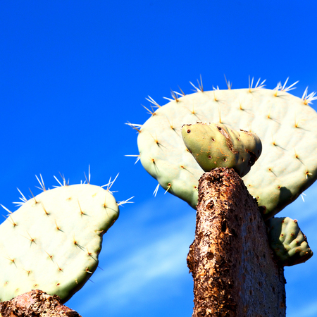 in south africa cloud sky and cactus with thorn like background Stock Photo
