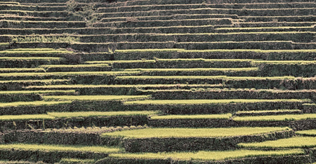 bali province: in  philippines  terrace field for coultivation of rice  from banaue unesco site