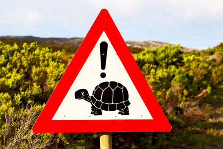 blur in south africa close up of the turtle sign like     texture background Stock Photo