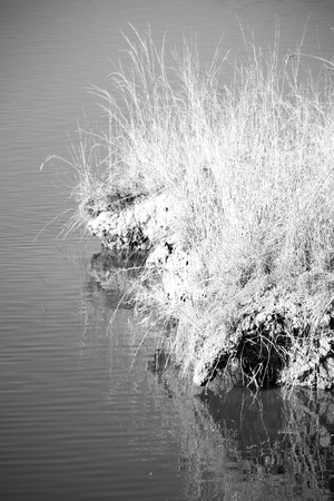 black moor: in lesotho mlilwane wildlife santuary the pound lake and  tree reflection in water