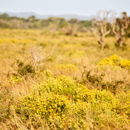 blur in south africa close up of the colza yellow field like   texture background Stock Photo