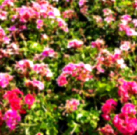 blur in the spring colors    flowers and   garden