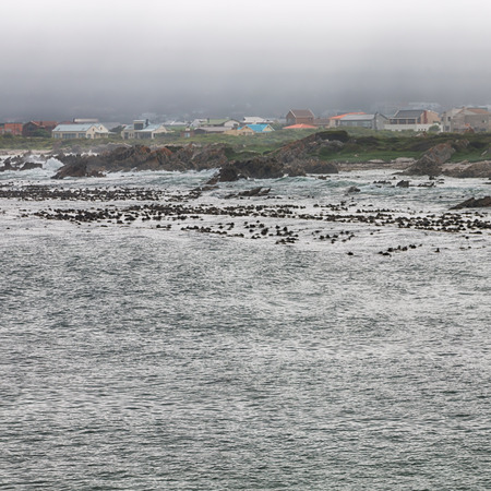 blur in south africa   bettys bay wildlife  nature  reserve birds  penguin and rocks