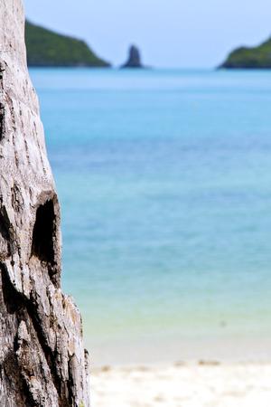 asia kho phangan bay isle white  beach  tree  rocks in thailand  and south china sea