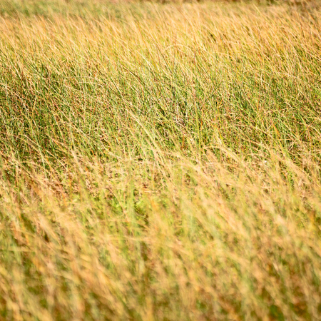 blur in  south africa  abstract grass like background texture Stock Photo