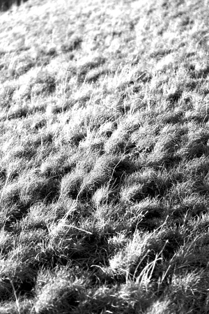 lesotho: blur in  south africa  abstract grass like background texture Stock Photo