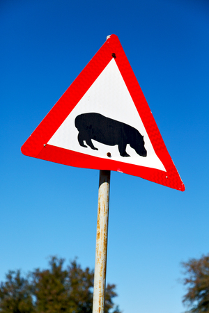 blur in south africa close up of the hippopotamus  sign like    texture background
