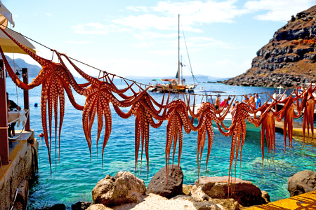 octopus        drying  in the sun europe greece santorini and light