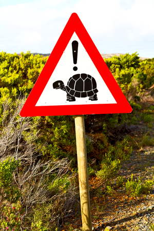 xing: blur in south africa close up of the turtle sign like     texture background Stock Photo