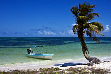 navigable: in mexico palm in the  blue lagoon relax and boat   of sian kaan Stock Photo