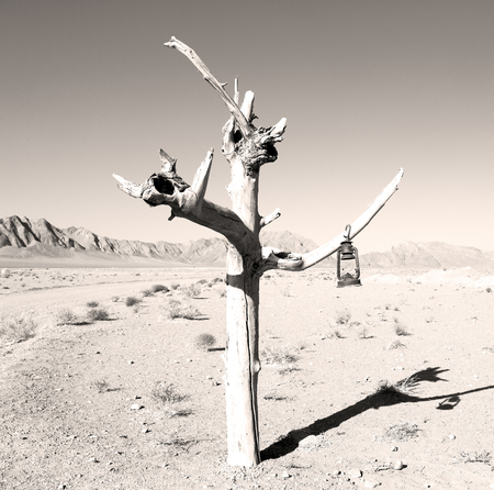 in iran old dead tree in the empty desert of persia lamp oil on branch Stock Photo
