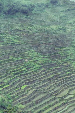 Desenfoque En El Campo De La Terraza De Filipinas Para El Cultivo De Arroz Del Sitio De La Unesco De Banaue
