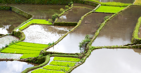 sapa: blur  in  philippines  terrace field for coultivation of rice  from banaue unesco site Stock Photo