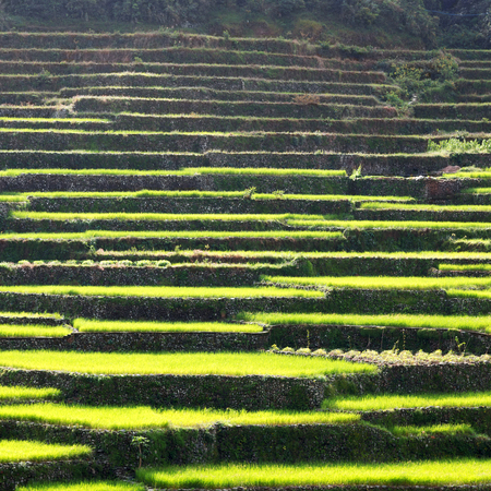 in  philippines  terrace field for coultivation of rice  from banaue unesco site Stock Photo